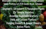 PLANT SALE @ THE COLWOOD CAMPUS